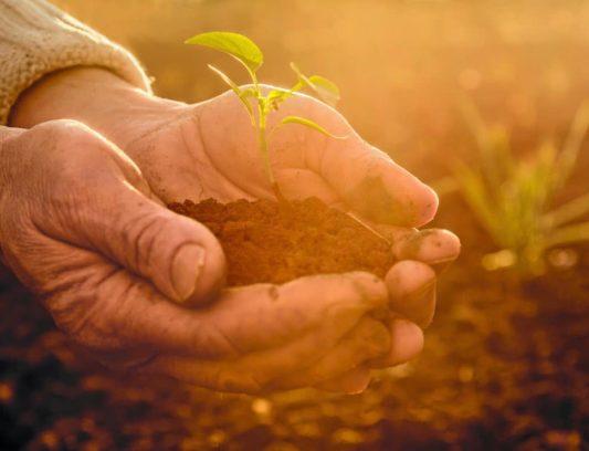 medio ambiente agricultura