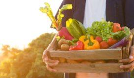 Verduras de verano
